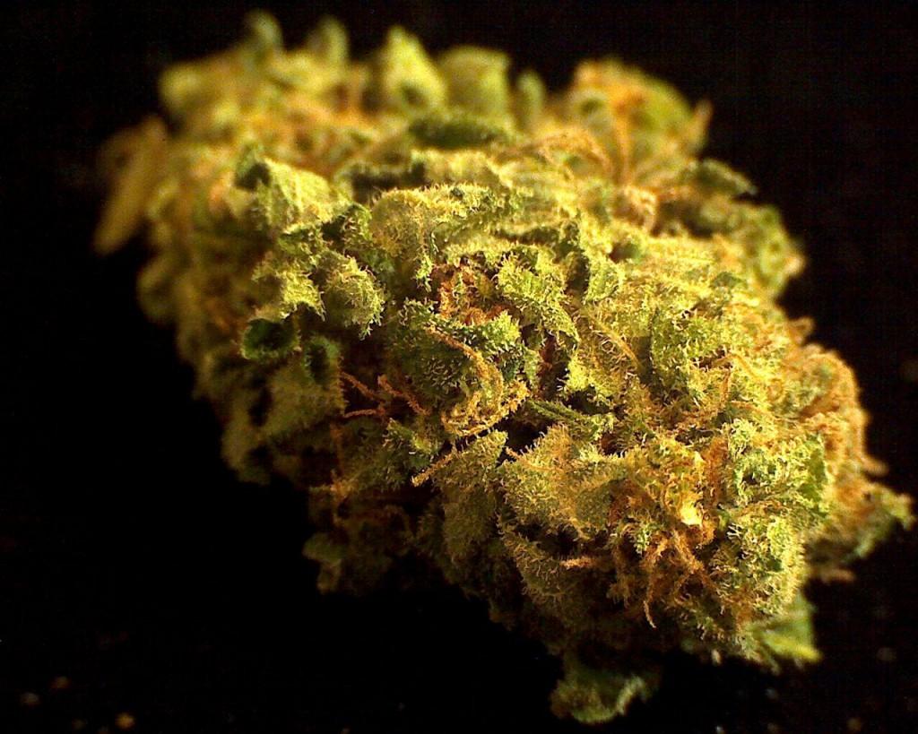 B*Good Denver Dispensary White Queen Strain