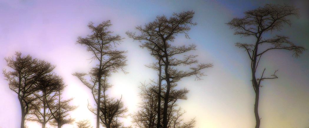 Glowing trees mdma sky ecstasy