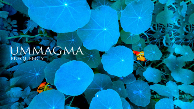 Ummagma Frequency Artwork
