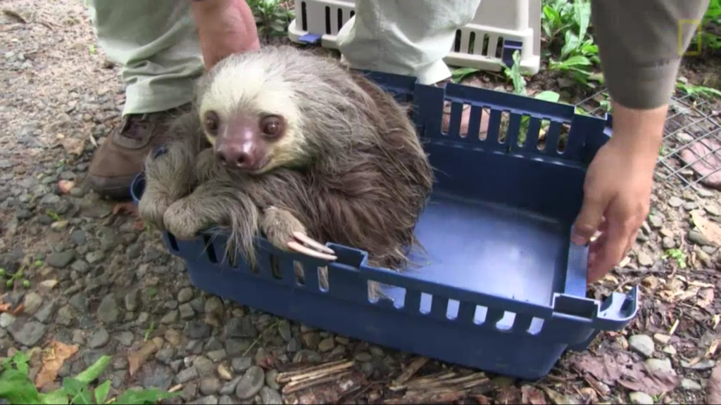 Demon-possessed sloth rescued