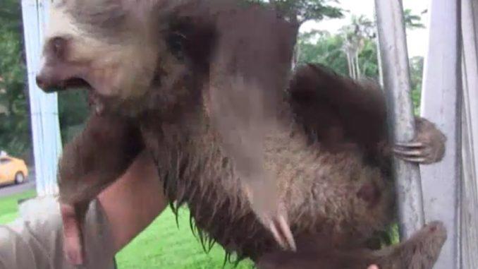 demon-possessed sloth-featured image