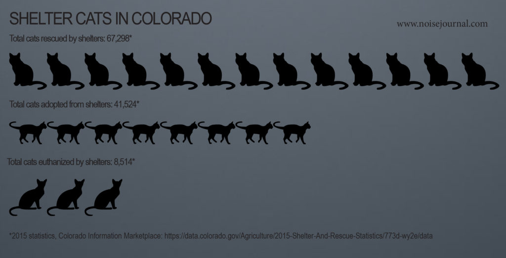 2015 colorado rescue cat statistics graphic
