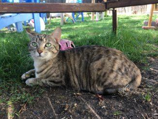 Deidra cat Rocky Mountain Feline Rescue